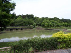 於大公園大池